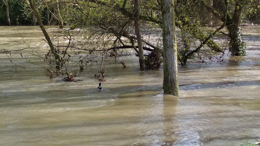 Imagen de las inundaciones río Arga en abril de 2018